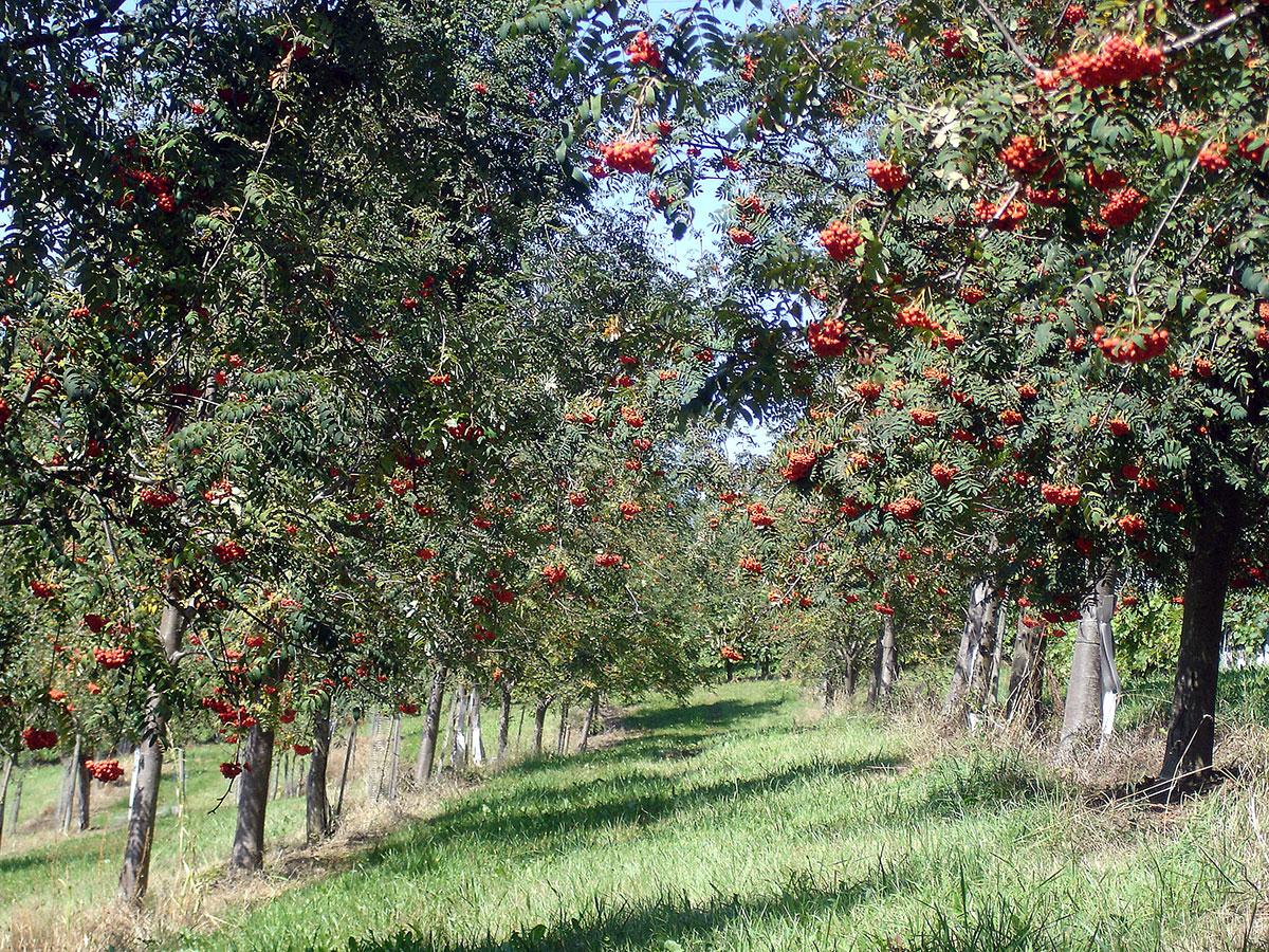 Obstgarten Nestelberger