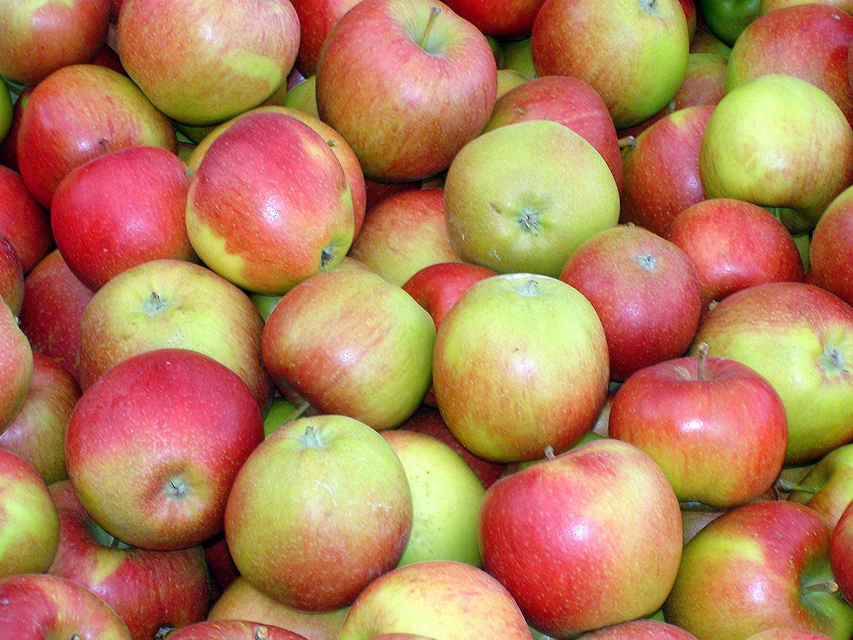 Äpfel in Apfelkiste