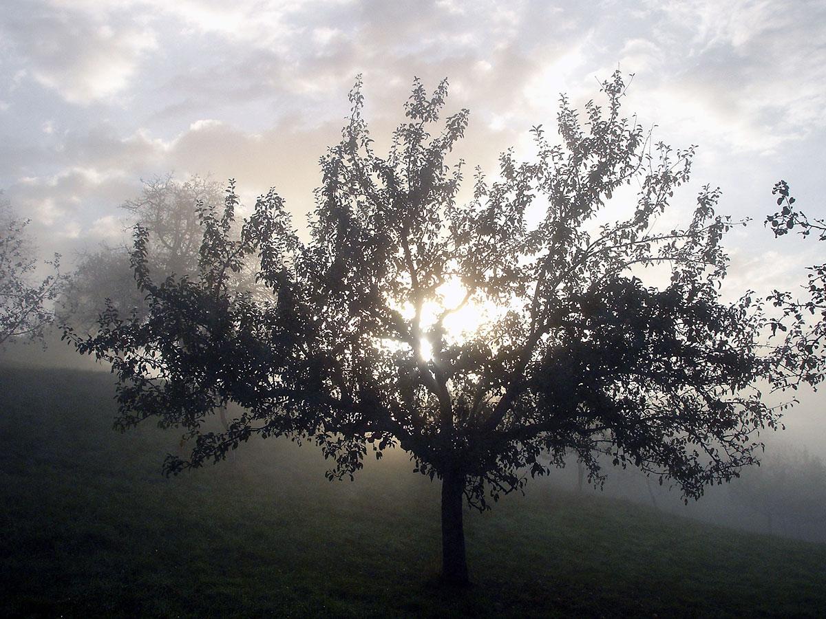 Apfelbaum schöne Stimmung